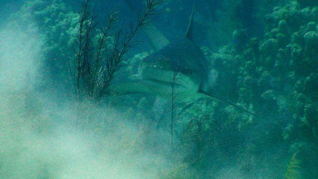 shark3_final