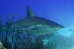 shark2_final