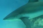 shark4_final