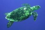 turtle_final
